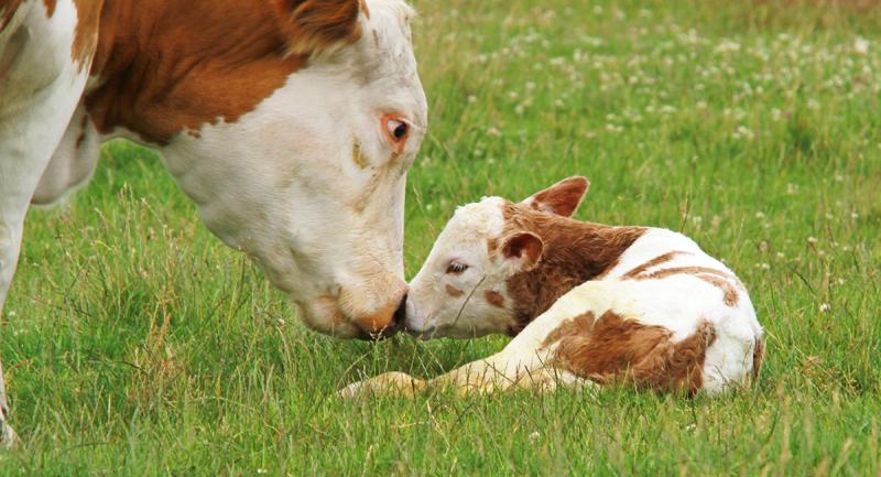 Tiere Haben Rechte Wir Fordern Sie Ein Tierrechte De Menschen