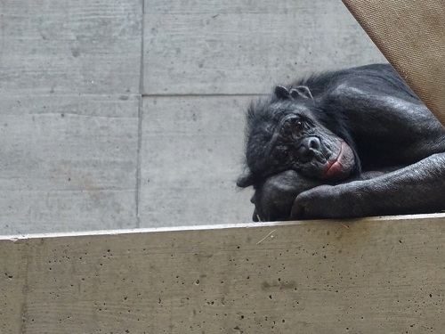 interview zoos sind und bleiben gef ngnisse menschen f r tierrechte. Black Bedroom Furniture Sets. Home Design Ideas